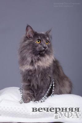 Не кошка, а королева!