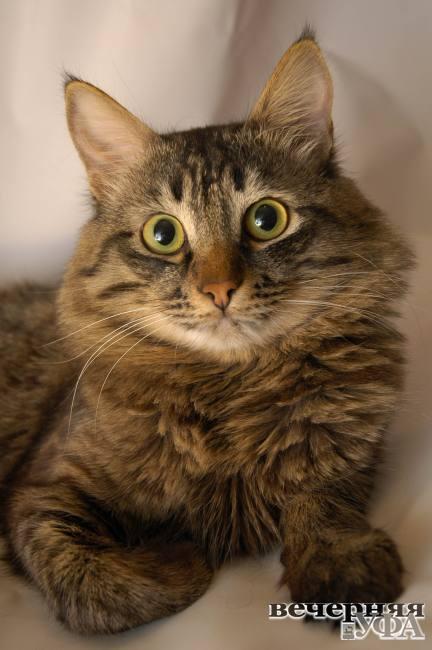 Котенок по имени Тяв  и серо-рыжая банда