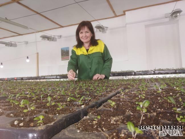 «Зеленые строители» готовятся побить рекорд