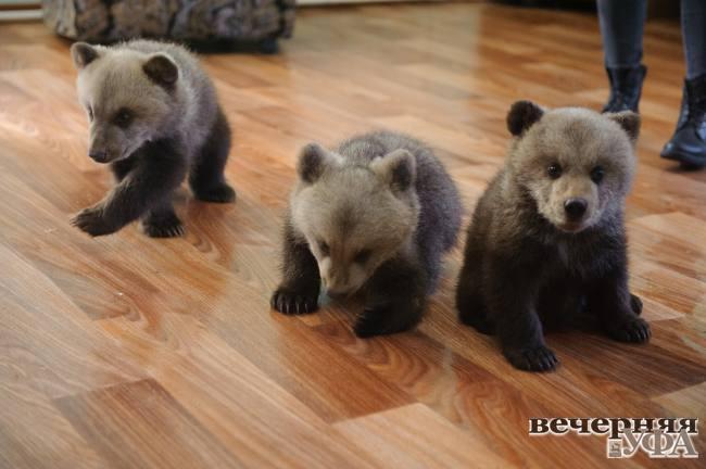 Медвежата в подарок на Рождество